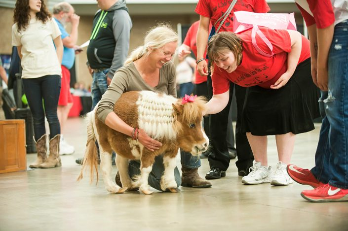 Miniature horse at the Expo